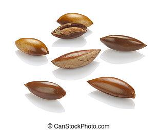 semillas, sapote, blanco, cierre, Arriba