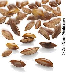 semillas, sapote, blanco
