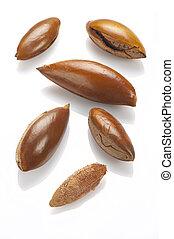 sapote, cierre, semillas, Arriba, blanco, Un