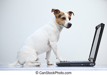 Jack russell terier with notebook on white background