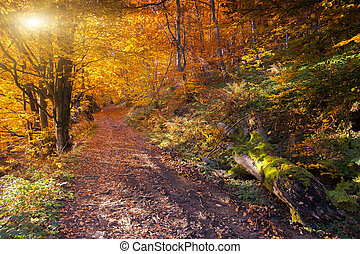 forest - Beautiful colorful autumn leaves in the forest...