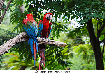 Blue-and-red macaw[Ara ararauna] sitting on log