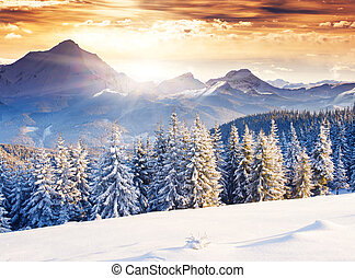winter - Fantastic evening winter landscape. Dramatic...
