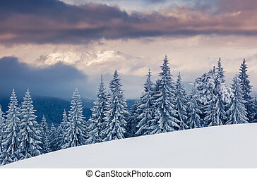 winter - Fantastic winter landscape. Dramatic overcast sky....