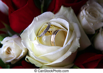 Rings in a rose - Wedding rings in a cream colored rose