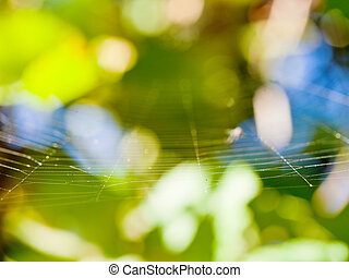 sunlit thin gossamer with blurred background