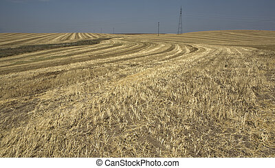 harvested wheat fields - View of harvested wheat fields and...