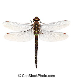 dragonfly macro isolated on white