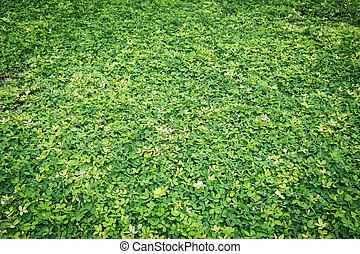 Green grass land