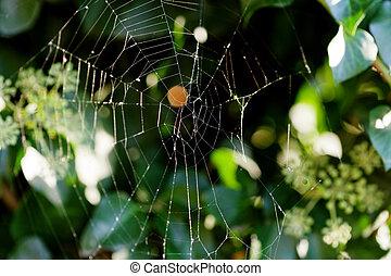 cobweb on boxwood bush in autumn morning