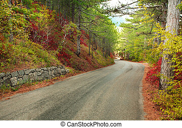 Asphalted mountain road through colorful autumn forest