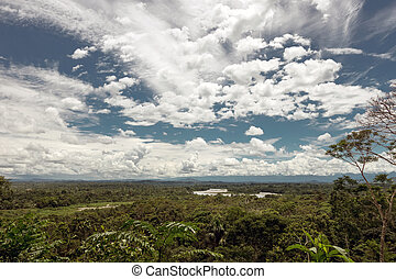 Rainforest, Napo, River's, basin