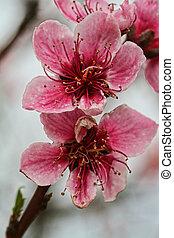 Tree Flowering
