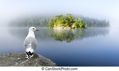 small island and seagull in foggy morning