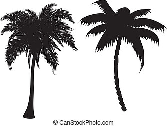 Palm tree silhouettes - Two black palm tree silhouettes on...