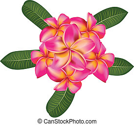 Plumeria with leaves