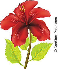 Red hibiscus flower illustration on white background