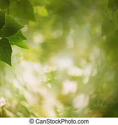 In the forest, abstract natural backgrounds for your design