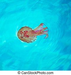 mditerranean, Malva, turquesa, aguas, medusa