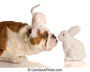 dog kissing the easter bunny - curious bulldog with easter...