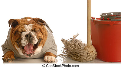 house breaking a bad dog - adorable bulldog sitting beside...
