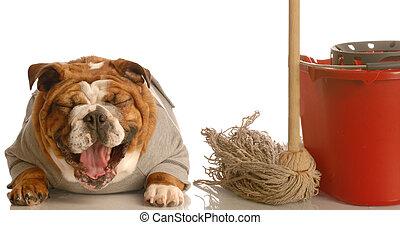 casa, quebrar, mau, cão