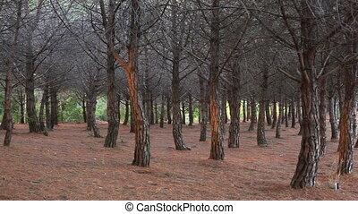 Wild forest.