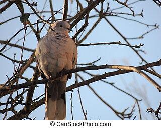 Pigeon sur un fil