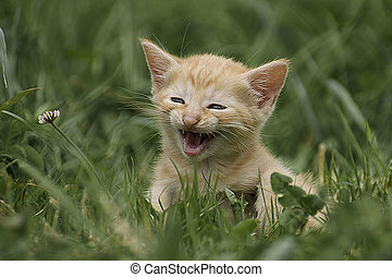Kitten auf einer Wiese - Ein kleines Kaetzchen ruft auf...