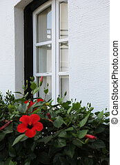 window and a flowering bush - box with flowering tropical...