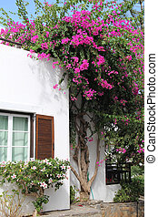 flowering bush - Greek landscape with house and a pink...