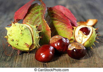 Horse Chestnut with autumn leaves. - Chestnuts and autumn...