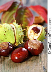 Chestnuts and autumn leaves - Chestnuts and autumn leaves on...