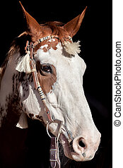 Paint Horse Portrait - a portrait of a paint horse with...