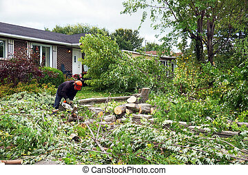 Cutting large tree in the yard - Professional worker cutting...