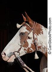 Paint Horse Portrait - a portrait of a paint horse with...