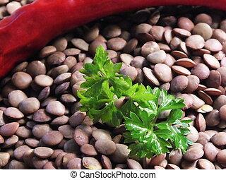 Lentil seeds