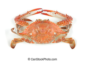 Boiled crab in isolated white background