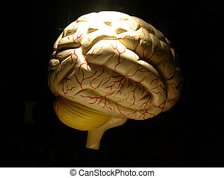 Human brain Model - Model of a human brain, isolated black