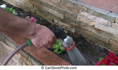 Man watering petunia flowers and washing his hands