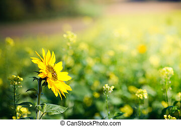 natural flower in natur - natural fresh flower in natur with...