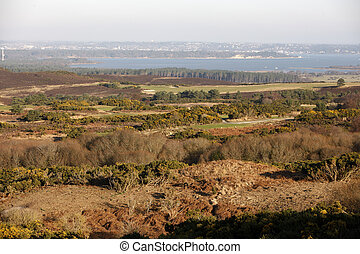 Studland heathland, Dorset, UK