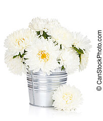 White aster flowers. Isolated on white background
