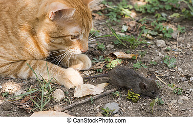 Cat and mouse in garden. Cat catching mouse