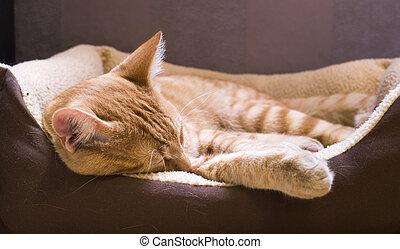 Sleeping cat - Sleeping orange cat in cat bed