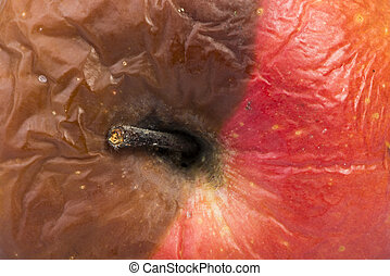 Rotten apple. Part brown and part red