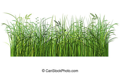 Green grass - Illustrated green grass. Image contains...