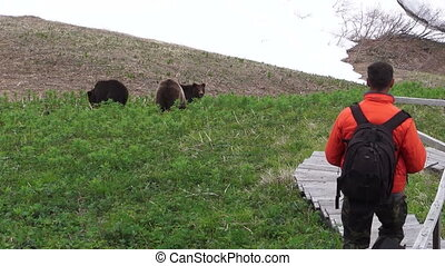 brown bear near man