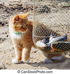 Young red maine coon and fish. Outdoor portrait.