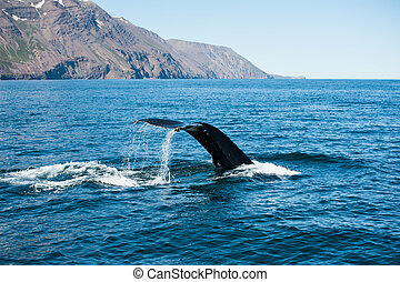 Humpback whale fin - Tail fin of the mighty humpback whale...